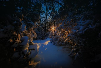 A photograph of late day sunlight pierces a snow covered wooded trail meandering through the thicket.