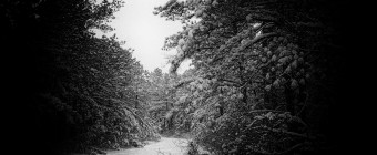 Manahawkin photographer Greg Molyneux's black and white photograph of a snowy trail turning off to the left in the Pinelands. This photograph features a grainy treatment and stark black and white contrast juxtaposing the light and dark. All light focuses on the path.