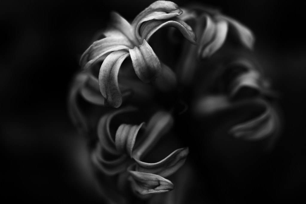 A low key black and white macro photograph of a lone Hyacinth flower. The shallow depth of field and stark contrast lend a strong mood to the picture.