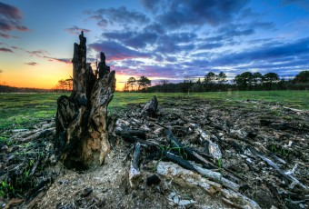 An HDR photograph take just after sunset from the Stafford Forge Wildlife Management Area. The foreground is marked by the charred remains of a lone tree stump. Fresh grasses begin to fill in the ashen remains.