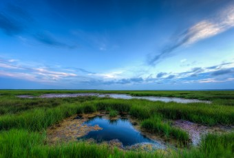 A wide angle HDR photograph taken during golden hour overlooking a tidal pool and glowing green salt marsh.
