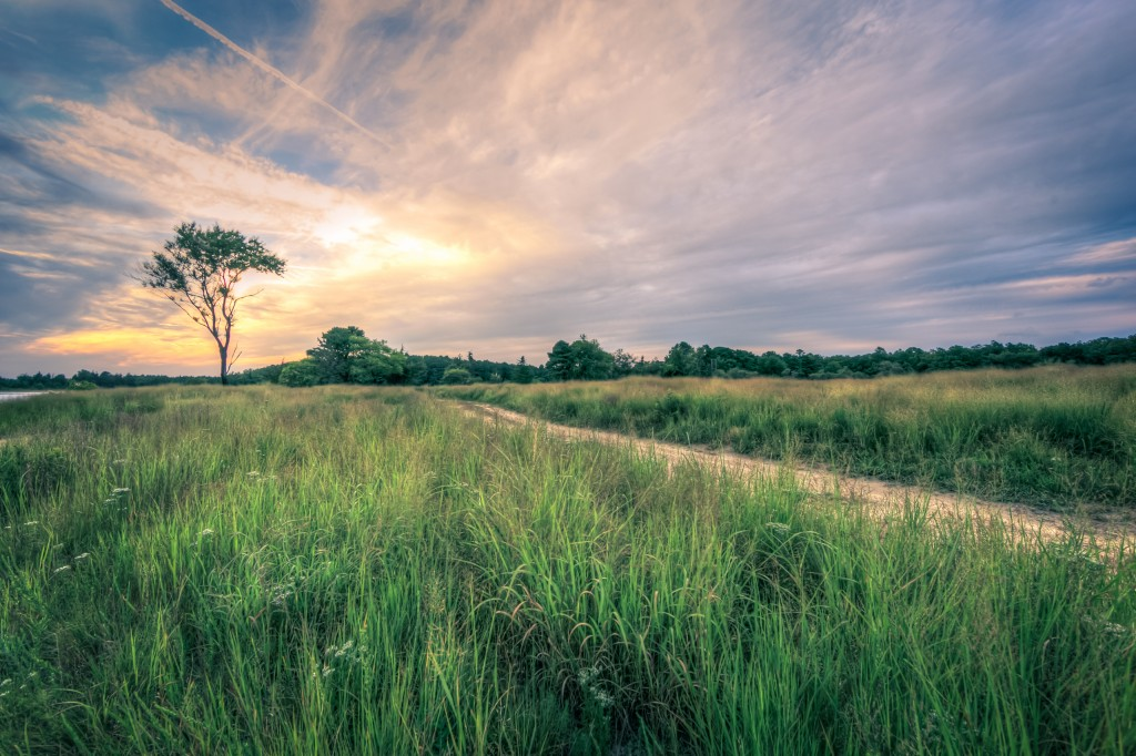 A cross processed wide angle landscape photograph taken during golden hour at Stafford Forge Wildlife Management Area. The purple hues and single solitary pine at the end of a meadow grass ensconced dirt road create a whimsical, almost melancholy mood in the scene.