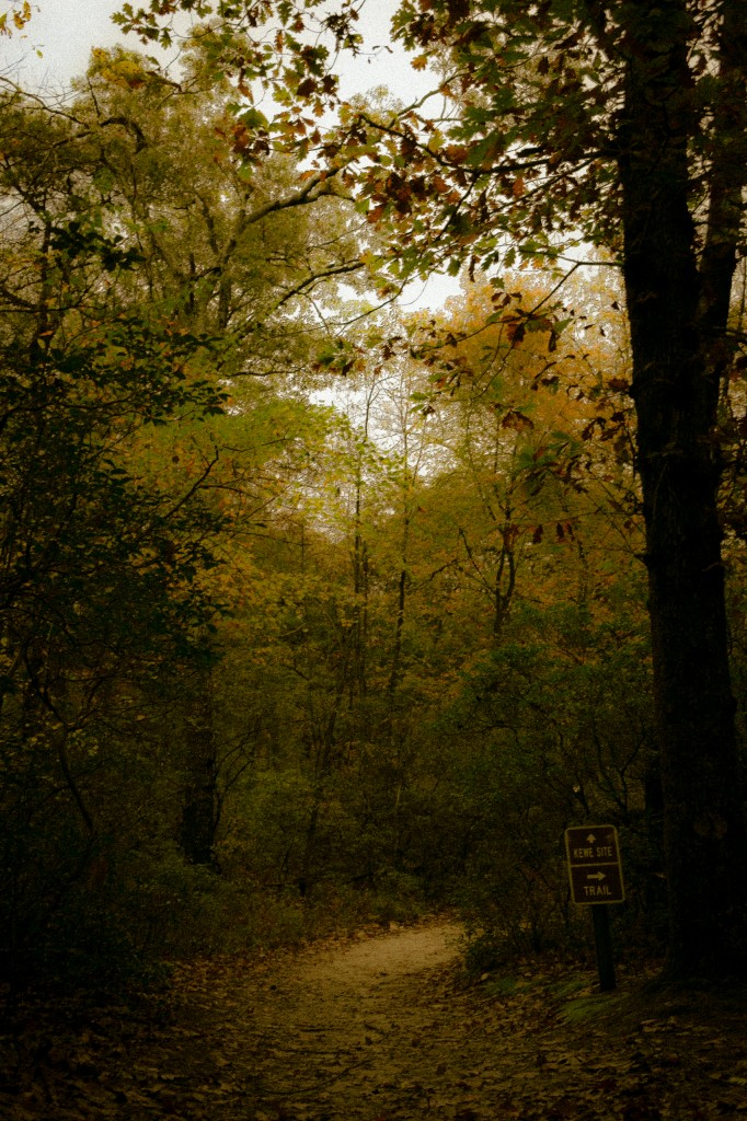 Moody light seeps in deep with this brooding low key photograph of a leafy footpath in the Pinelands leading around a bend to here unseen Kewe campsite at the Joseph A. Citta Scout Reservation