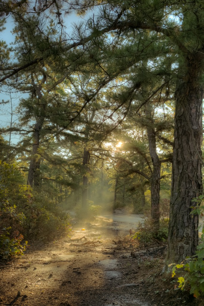 In this HDR Pinelands photograph, early morning rays pierce through the tree line illuminating an eastward path through the pines