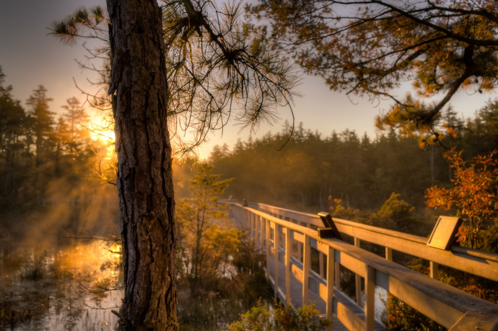 An HDR photograph of a boggy cedar swamp taken in the heart of the Pinelands just after dawn during golden hour