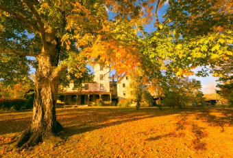 A golden hour HDR photograph of the Batsto Village Mansion framed behind a large maple tree ablaze in Fall color orange leaves