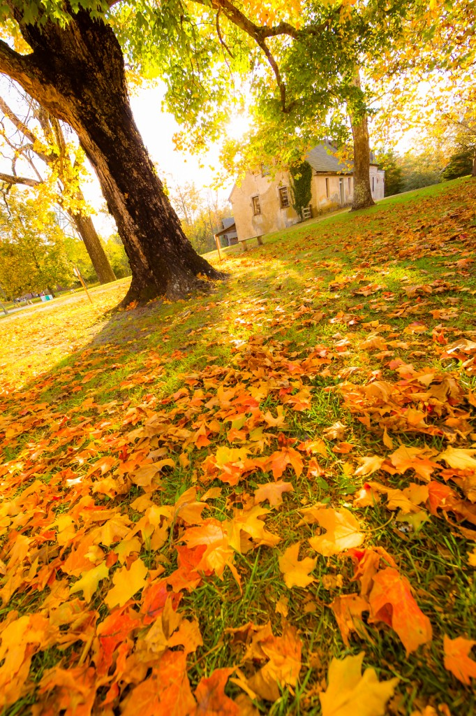 A portrait orientation golden hour photograph of lush grass littered with orange and yellow maple leaves. The blown out sky and soft yellow glow create an ethereal, shire like feel for the viewer