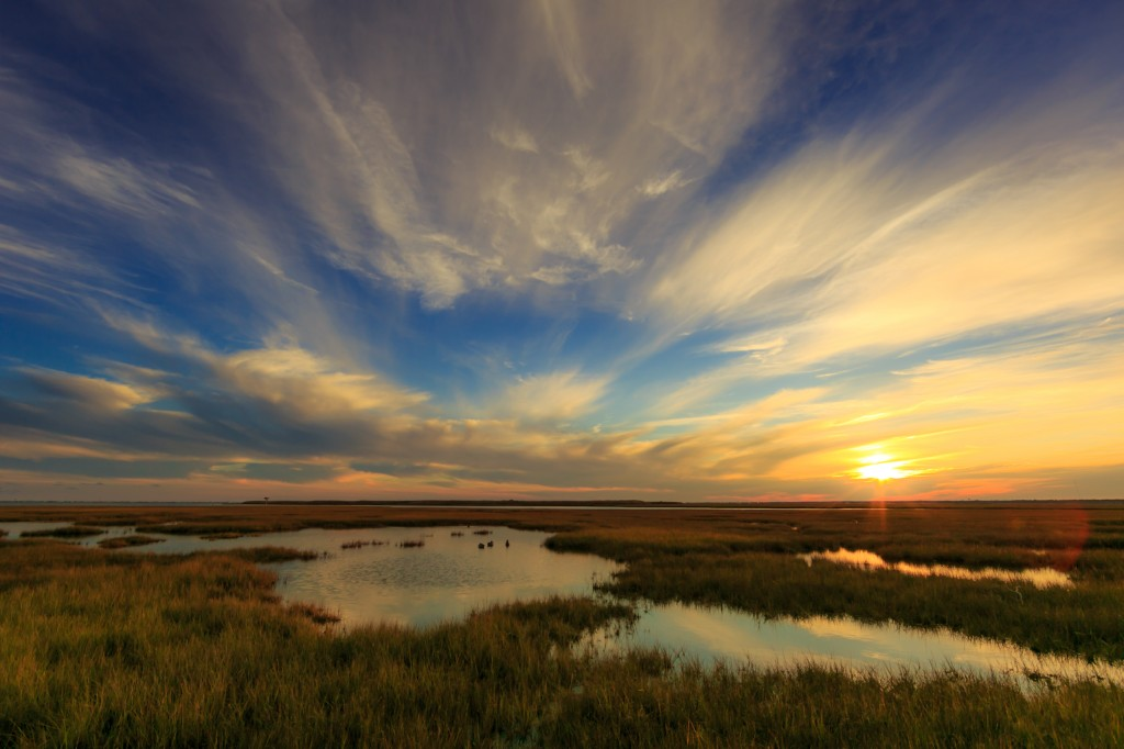 Cirrus clouds tinted gold brush the whole of the sky in this late Fall marsh landscape photograph with soft tones easing and subduing the viewer's eye.