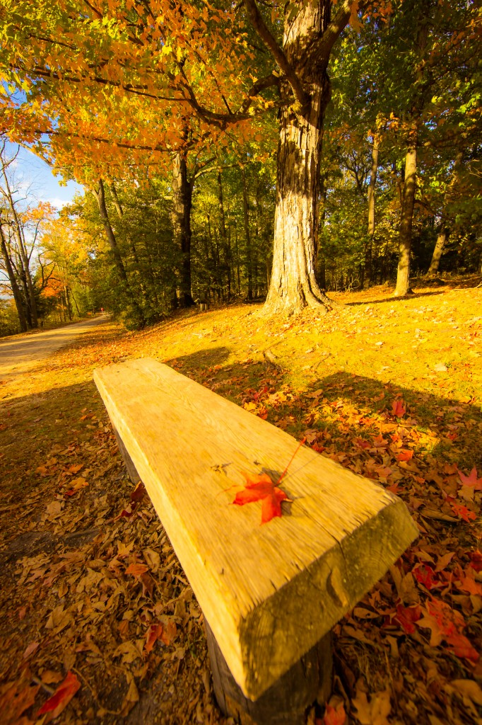 A portrait orientation golden hour photograph with a foreground marked by a lone red maple leaf sitting on an empty park bench on the Batsto Village grounds with maple trees in the background