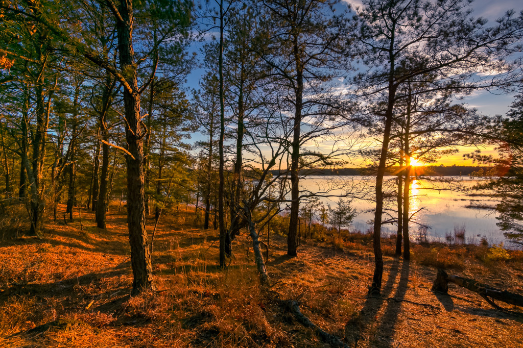 Rich golden hour sunlight washes over Stafford Forge pouring yellow light throughout the trees of the Pinelands in this HDR photograph.