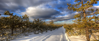 Golden hour in the snow; as seen from the New Jersey Pinelands' Pygmy Pine forest. Fresh tire tracks and stunted pitch pine trees are illuminated by sunlight and marked with snow in this landscape HDR photograph.