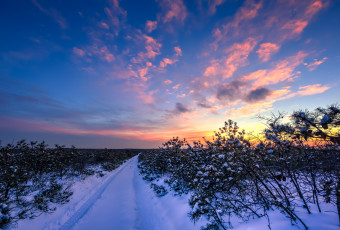 Snow covered trails and Pygmy Pines photographed from the Top of the World during blue hour