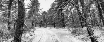 Nestled in the heart of the New Jersey Pinelands. fresh snow blankets the fire trails and pine trees of Greenwood Forest Wildlife Management Area in this black and white wide angle photograph.