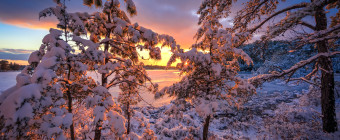 World class golden hour is magnified by the fresh fallen snow in this HDR photograph taken in the New Jersey Pinelands