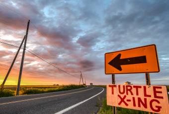 Vibrant road signs photographed at sunrise