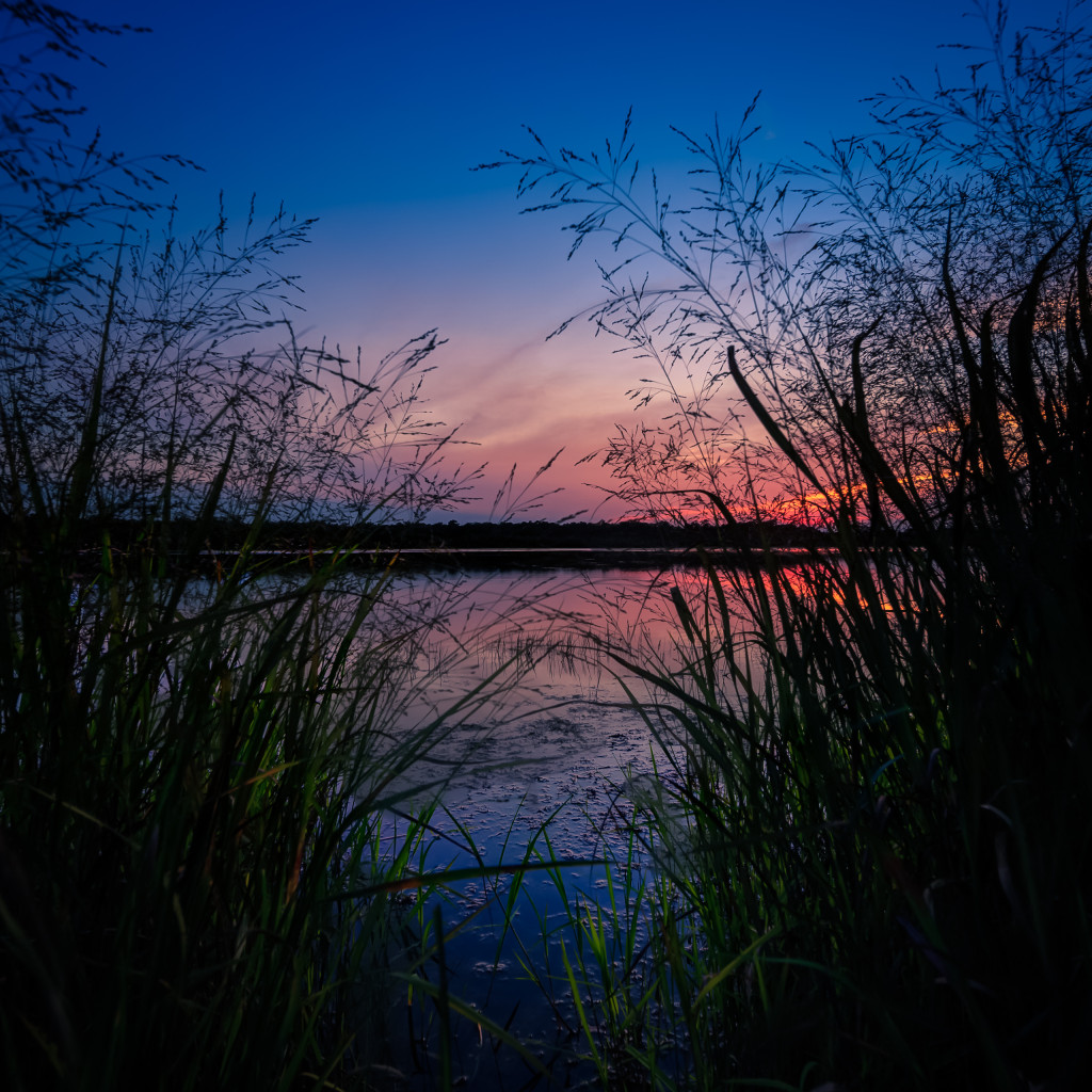 Square format HDR photograph of marsh grass and lake at blue hour