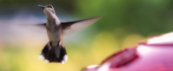 Macro photograph of a hummingbird mid flight approaching a feeder