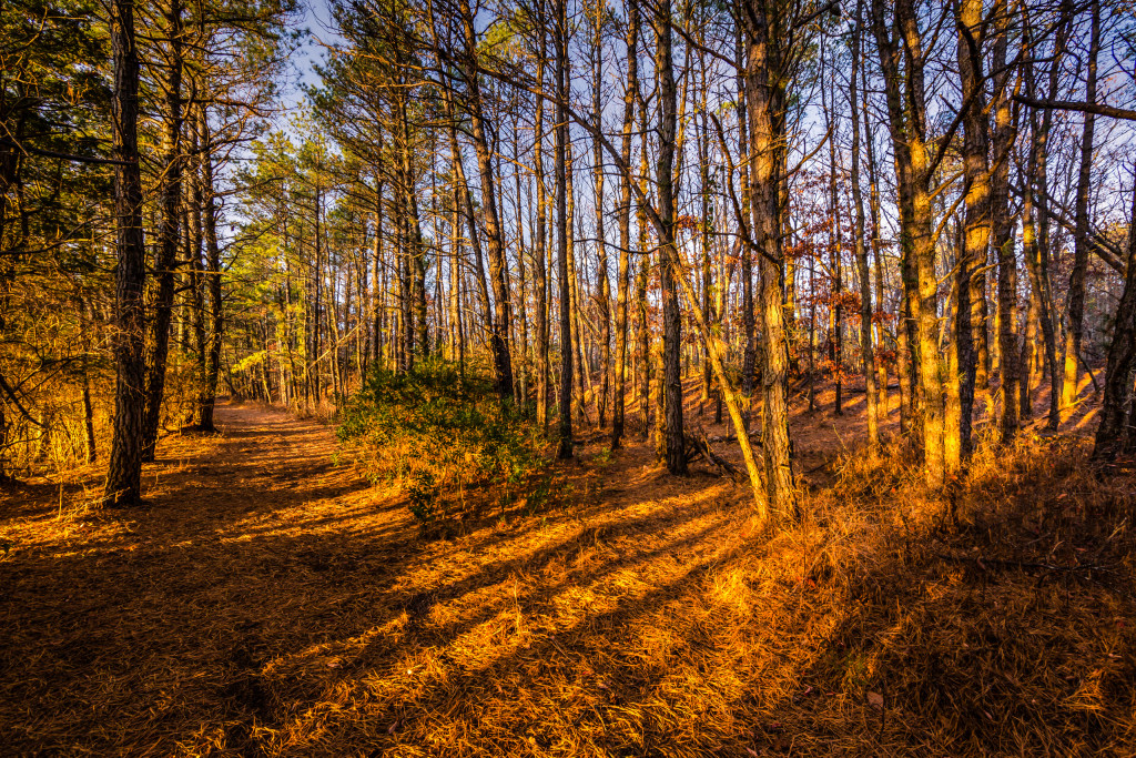 Wide angle landscape photograph of the Pinelands forest casting leading lines shadows during golden hour