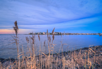 Square format landscape photograph of phragmites and Barnegat Bay at blue hour