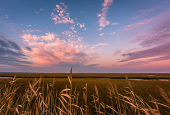Wide angle landscape photograph of pastel clouds over phragmites and marsh at sunset