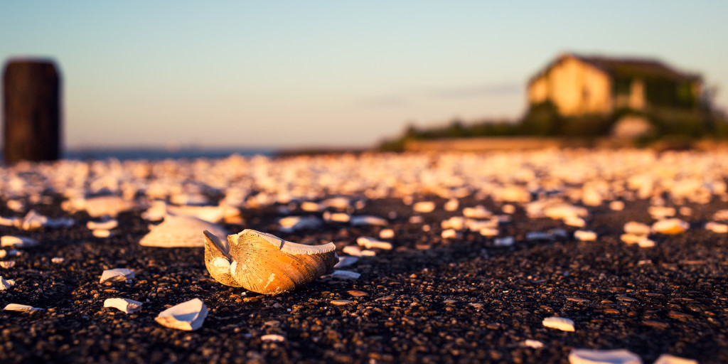 Photograph of broken seashells on a pier at the Crab Island Fish Factory