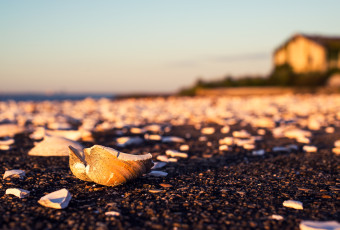 Photograph of broken seashells on a pier at the Crab Island Fish Factory