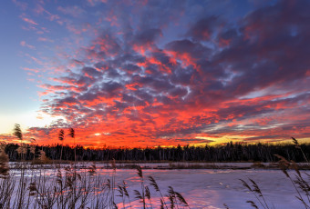 Vertical orientation photograph of an explosive sunset over frozen marsh and phragmites