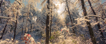 High key landscape snow photography of the New Jersey Pinelands