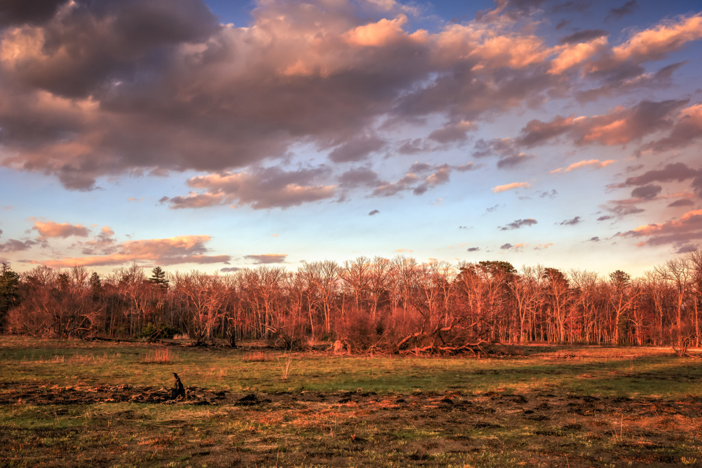 Golden hour landscape photograph made over a freshly cleared grove at Stafford Forge