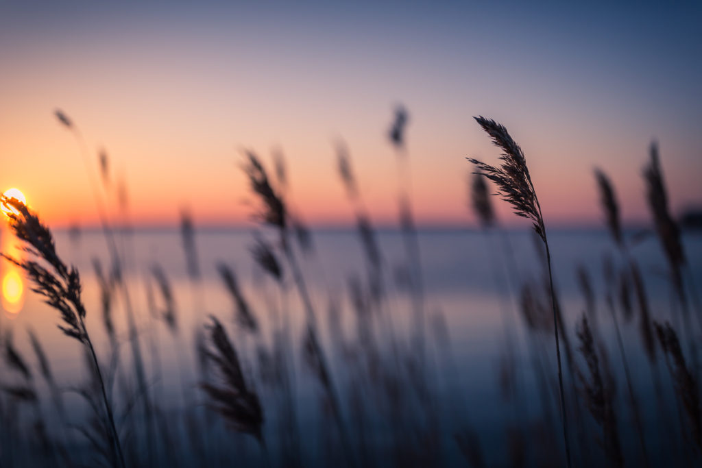 Shallow depth of field sunset photograph of phragmites along Barnegat Bay