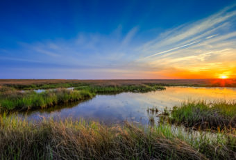 Wide angle landscape sunset photo revealing spring's return to the marsh with the greening sedge