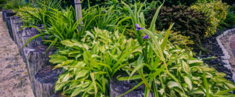 Vertical orientation wide angle photograph of well manicured plant life and gazebo at blur hour