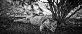 Black and white photograph of a tabby cat lounging outdoors.