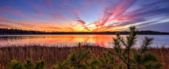 Sunset photo of deep colors, pine trees, grasses, and pond.