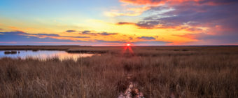 Vertical orientation HDR sunset photo over winter marsh.