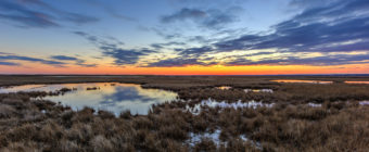 Blue hour landscape photograph over dormant marsh grass.