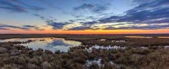 Blue hour landscape photograph over dormant marsh grass.