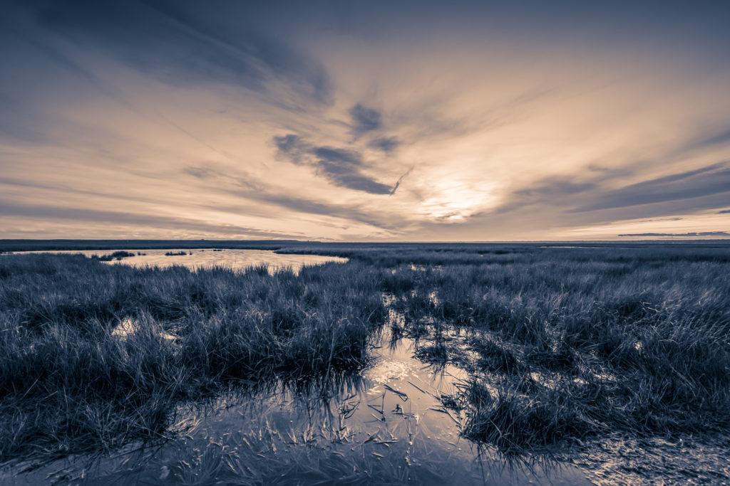 Sepia landscape photo of Cedar Run Dock Road salt marsh.