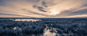 Sepia landscape photo of Cedar Run Dock Road salt marsh.