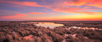 Sunset photo of pastel colored clouds over dormant marsh.