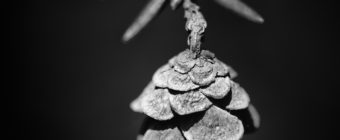 Black and white hemlock pine cone macro photo in square format.