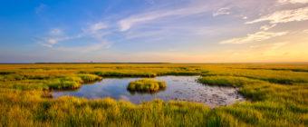 Golden hour landscape photo of a fresh green salt marsh.