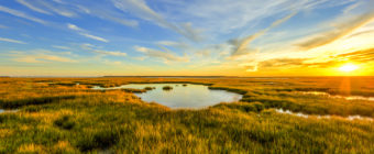 Golden hour salt marsh landscape photo.