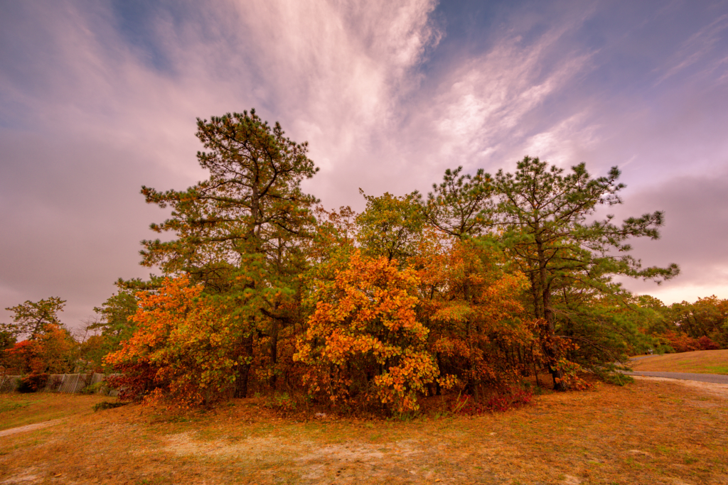 Landscape photo of fall foliage trees colored orange, red and yellow, mixed with green pines.