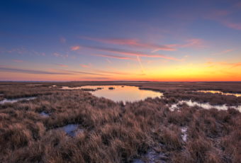 Pastel winter sunset over dormant salt marsh.