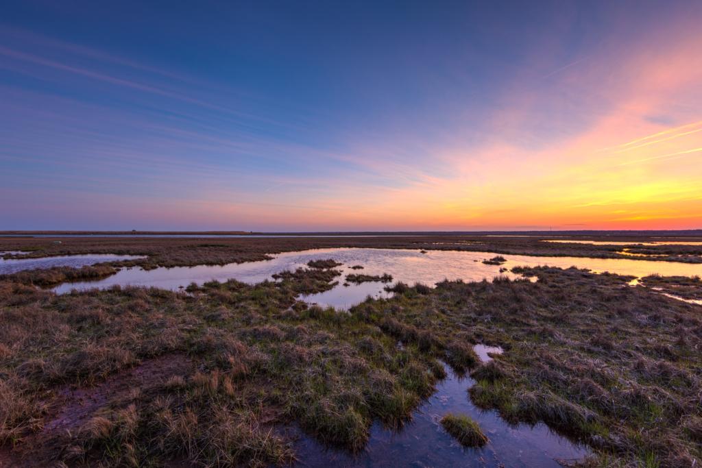 Pastel sunset photo of salt marsh, sedge, and tide pools.