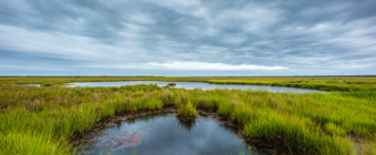 14mm wide angle landscape photo of wind swept salt marsh under cloudy gray skies.