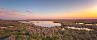 14mm wide angle landscape sunset photograph of the Cedar Run Dock Road salt marsh as it begins to green.