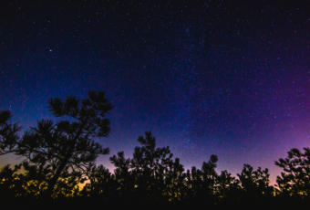 14mm wide angle astrophotography image of a star filled night sky captured atop the unique New Jersey Pinelands' pygmy pine trees.